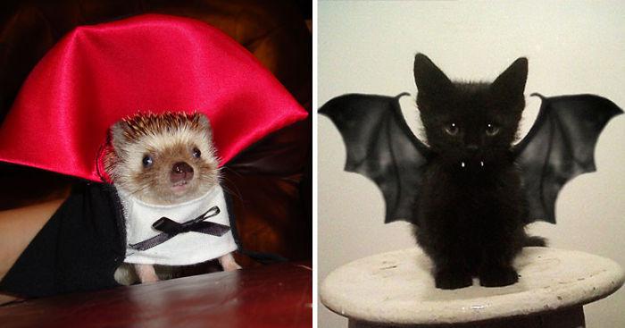 151 Terrifyingly Cute Halloween Costumes For Pets Bored Panda