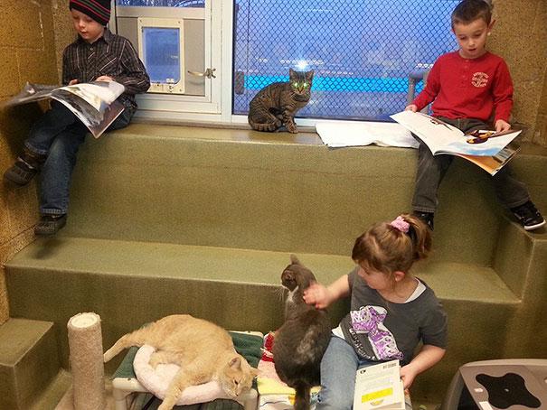 reading-children-shelter-cats-book-buddies-10
