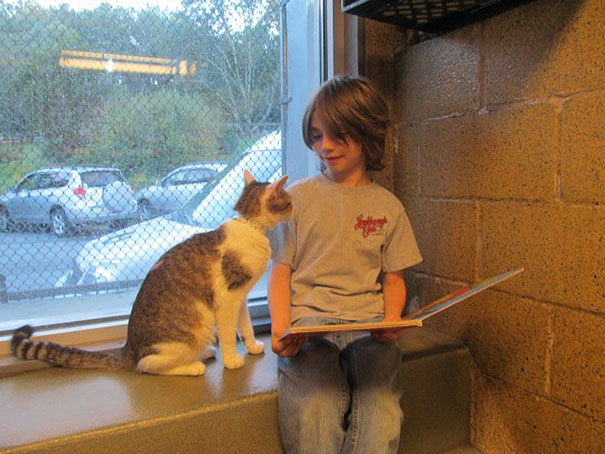 reading-children-shelter-cats-book-buddies-6