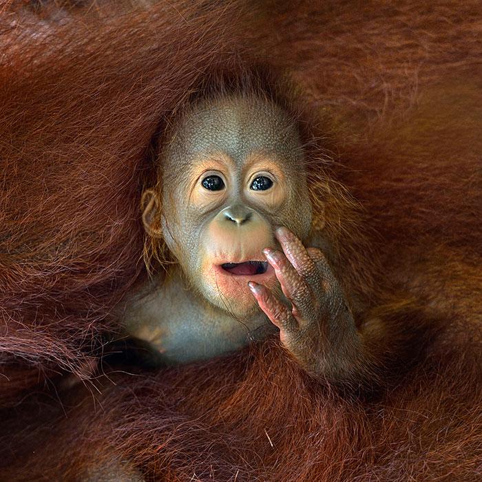 2014 Sony World Photography Awards' Shortlist Photos Unveiled