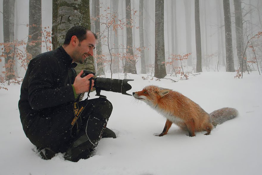 pictures of a fox
