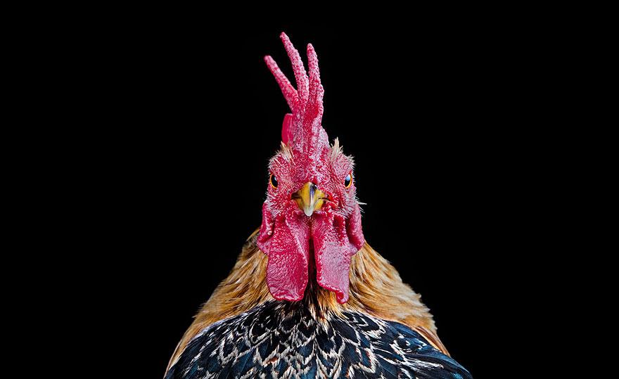 ayam-seramas-chicken-photography-ernest-goh-1