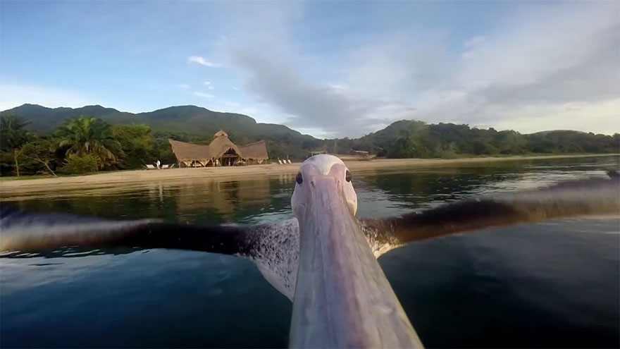 big-bird-pelican-gopro-greystoke-mahale-tanzania-2