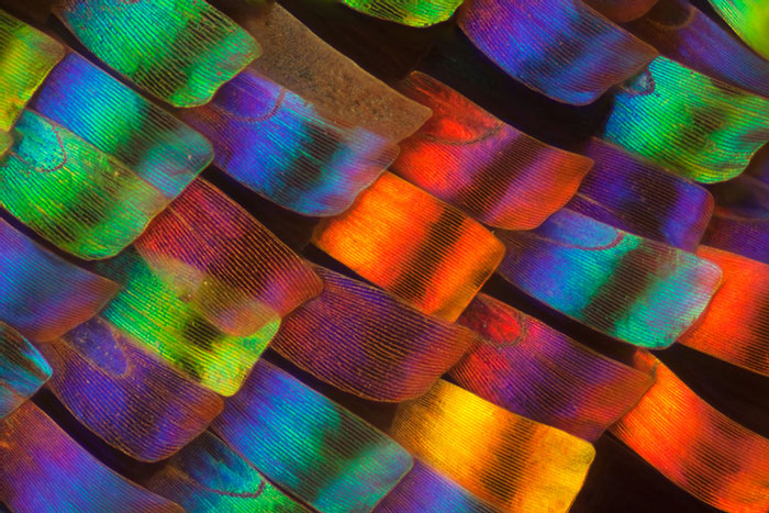 Biochemist Takes Stunning Macro Photographs of Butterfly Wings