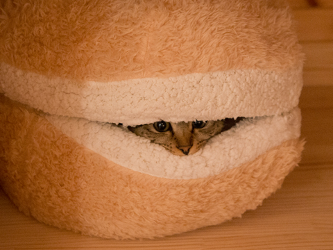 cat-burger-bed-maru-7