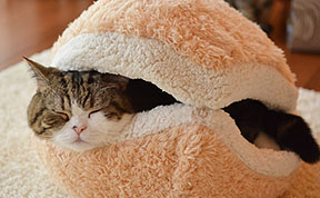 This Cat Burger Bed Will Turn Your Cat Into An Adorable Burger Patty