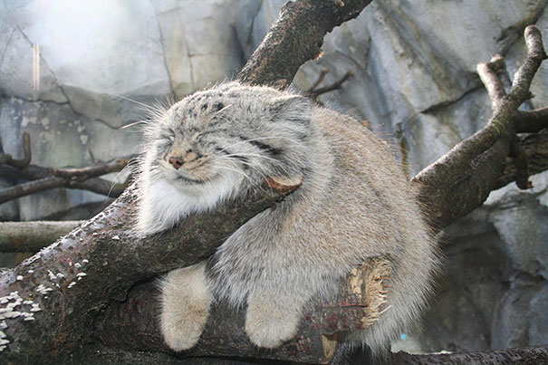 OMG, this little cutie is so cute he looks very fluffy and ... |Cute Fluffy Talking Animals