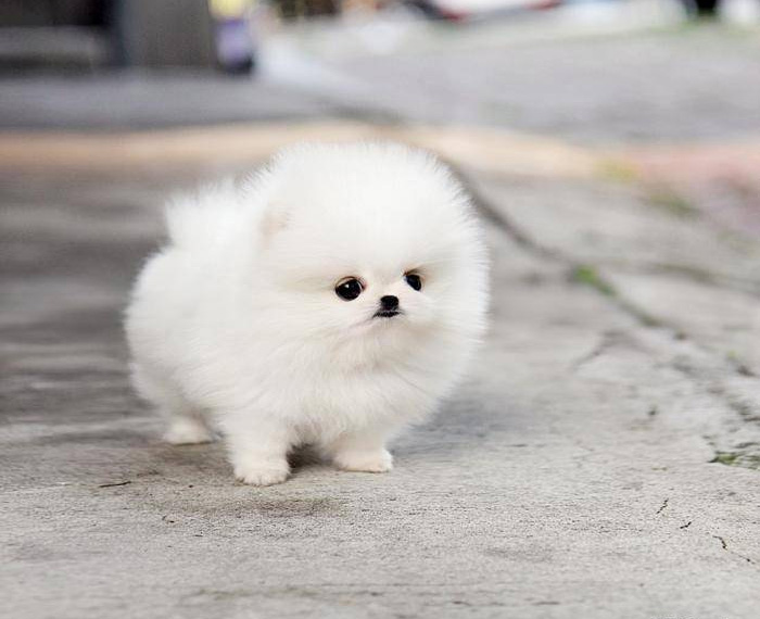 These 16 Fluffy Animals Will Make You Say Awww