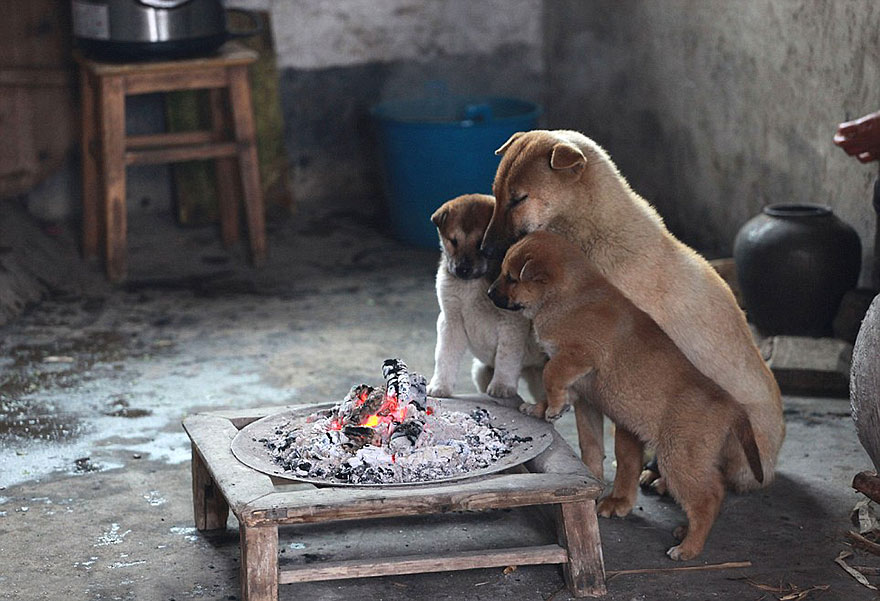 cute-puppies-barking-cold-stove-1