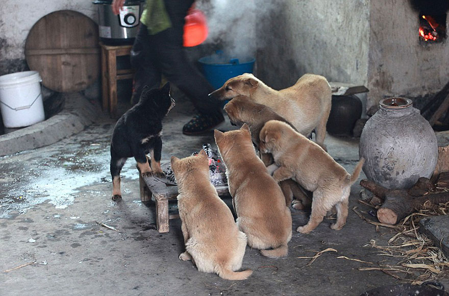 cute-puppies-barking-cold-stove-2