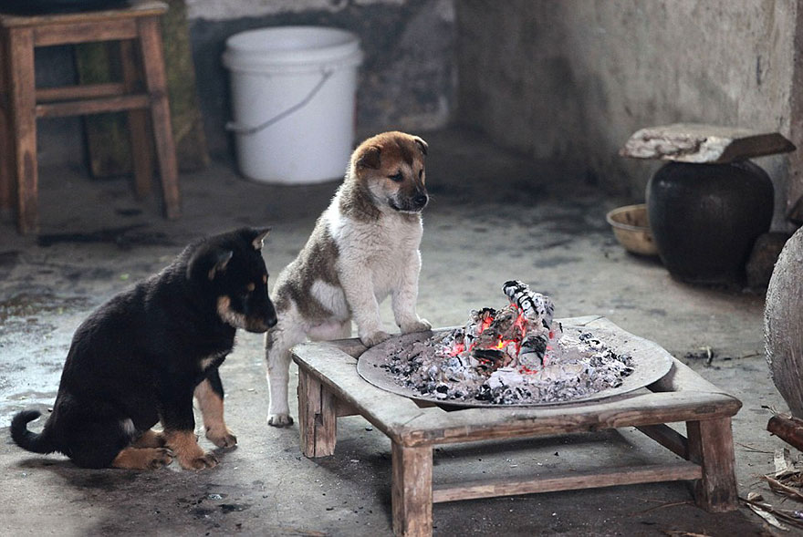 cute-puppies-barking-cold-stove-3
