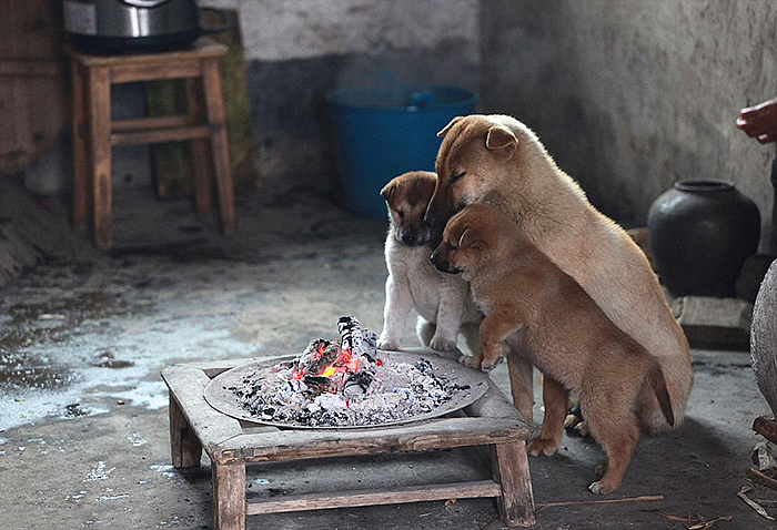 Freezing Puppies Gather Around Stove On A Cold Winter Day And Bark Non-Stop For Chef To Light It