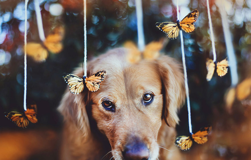 dog-photography-chuppy-golden-retriever-jessica-trinh-7
