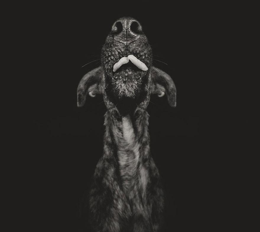 dog-portrait-photography-elke-vogelsang-10