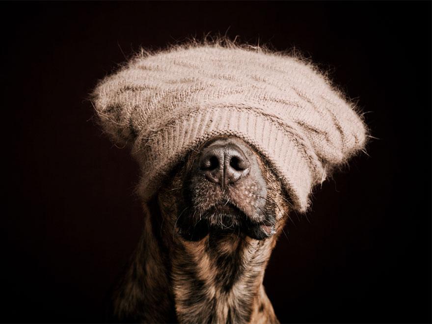 dog-portrait-photography-elke-vogelsang-13
