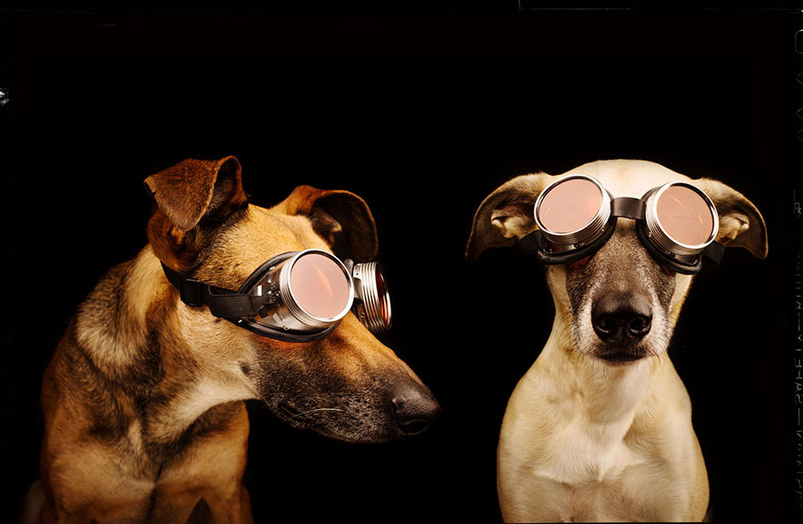 dog-portrait-photography-elke-vogelsang-17