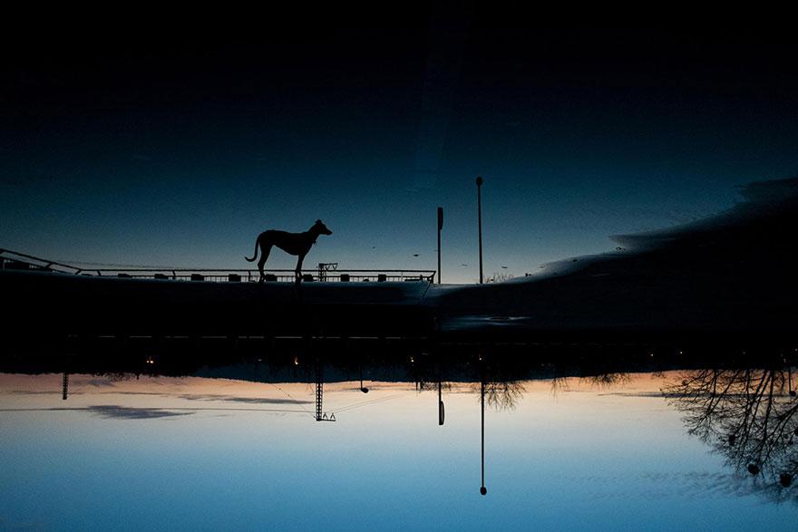 dog-portrait-photography-elke-vogelsang-22