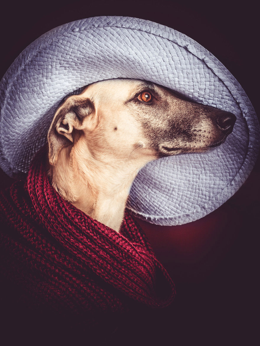 dog-portrait-photography-elke-vogelsang-3