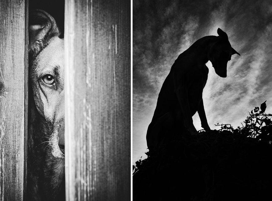 dog-portrait-photography-elke-vogelsang-31