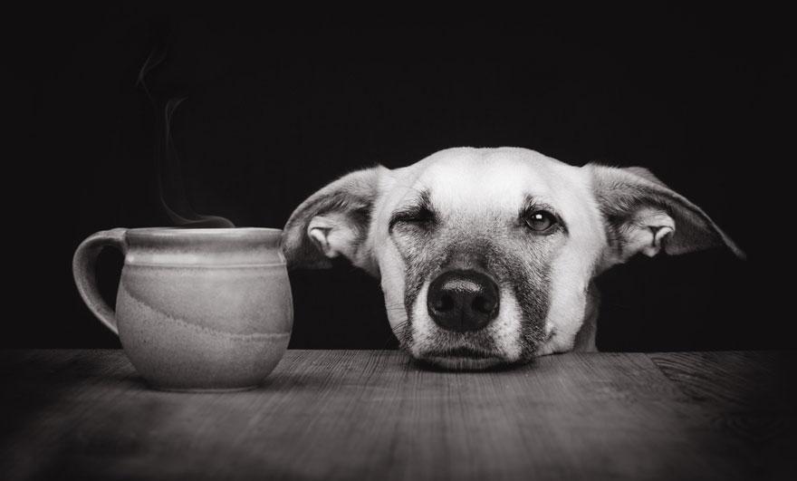 dog-portrait-photography-elke-vogelsang-33