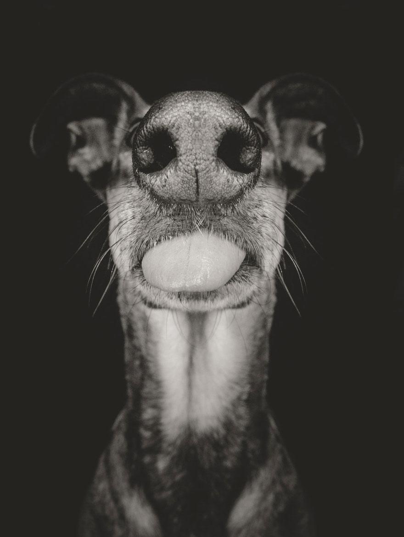 dog-portrait-photography-elke-vogelsang-8