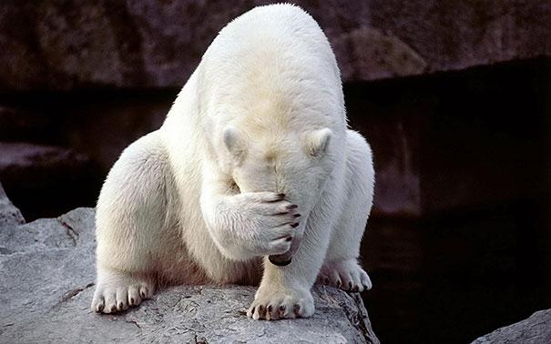 funny-bears-doing-human-things-10