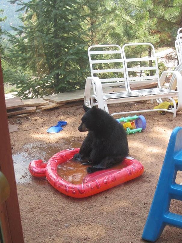 funny-bears-doing-human-things-28