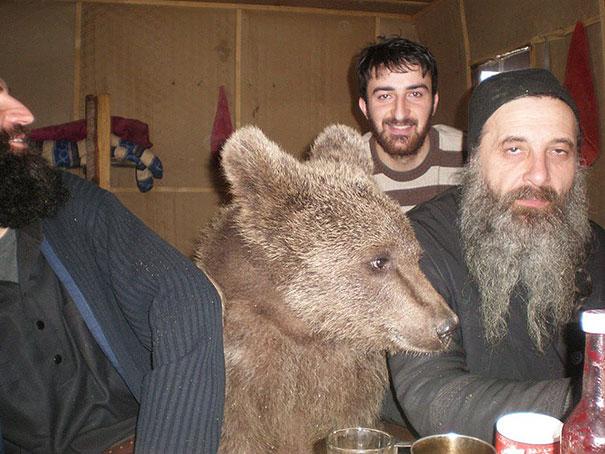 funny-bears-doing-human-things-3