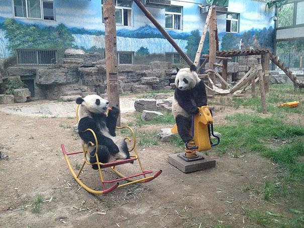 funny-bears-doing-human-things-31