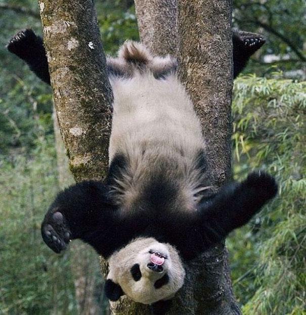 funny-bears-doing-human-things-33