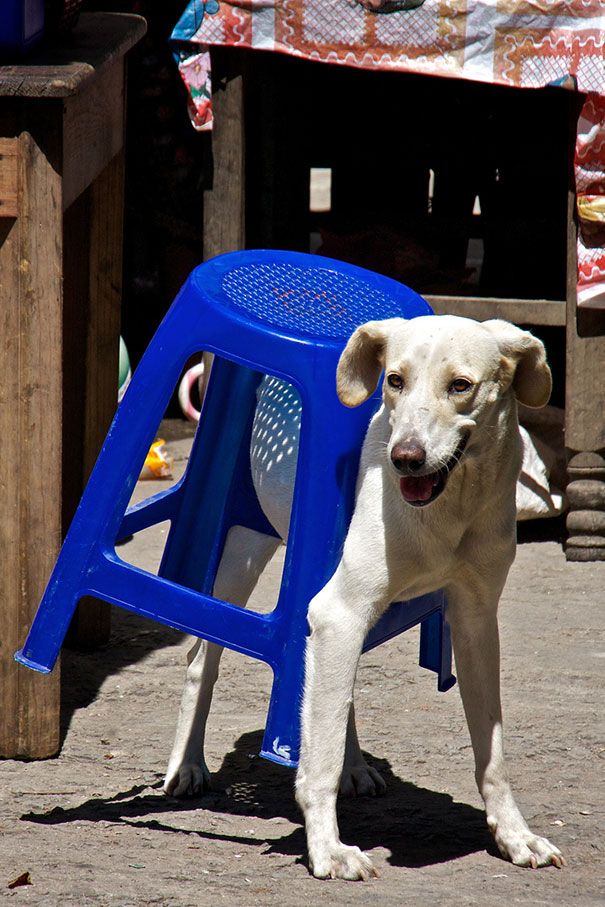 funny-cats-dogs-stuck-furniture-26