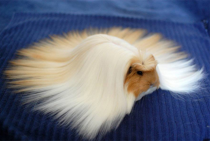 20+ Animals With Majestic Hair