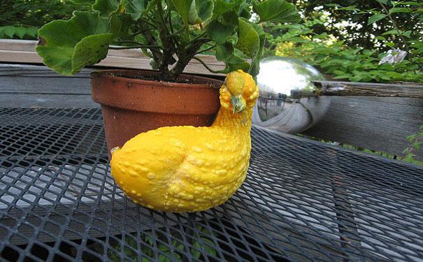 funny-shaped-vegetables-fruits-9