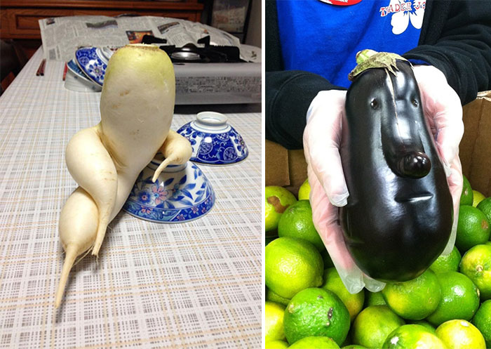 16 funny shaped fruits and vegetables that forgot how to be plants 16 funny shaped fruits and vegetables that forgot how to be plants bored panda altavistaventures Gallery