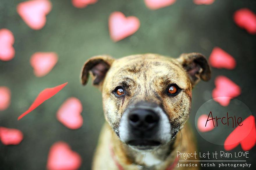 shelter-dog-photos-let-it-rain-love-jessica-trinh-3