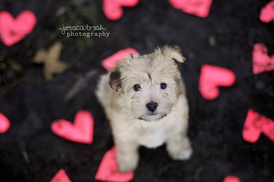 shelter-dog-photos-let-it-rain-love-jessica-trinh-4