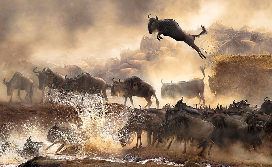 sony-world-photography-awards-2014-winners-7