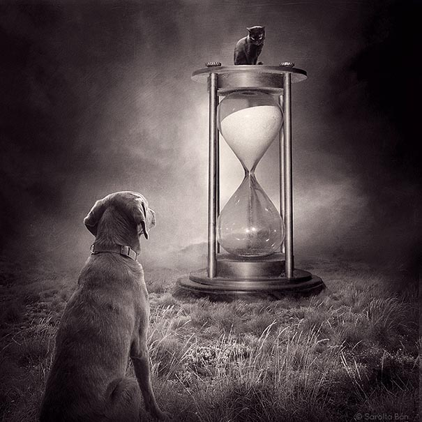 surreal-photoshop-images-shelter-animals-sarolta-ban-10