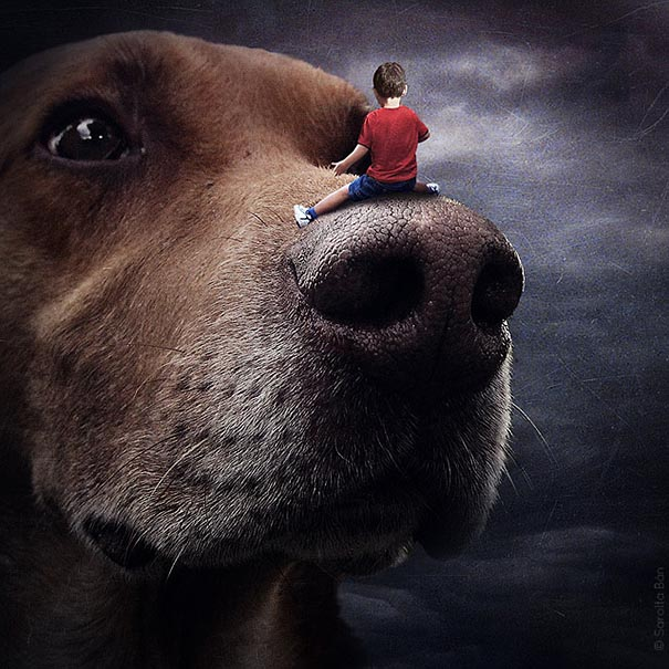 surreal-photoshop-images-shelter-animals-sarolta-ban-9