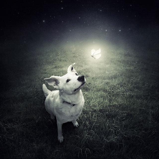 Artist Creates Surreal Pictures With Shelter Animals To Help Find Them New Homes