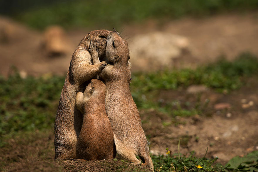 25 Of The Cutest Parenting Moments In The Animal Kingdom