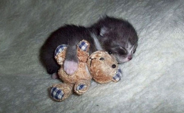 cute-animals-sleeping-stuffed-toys-22