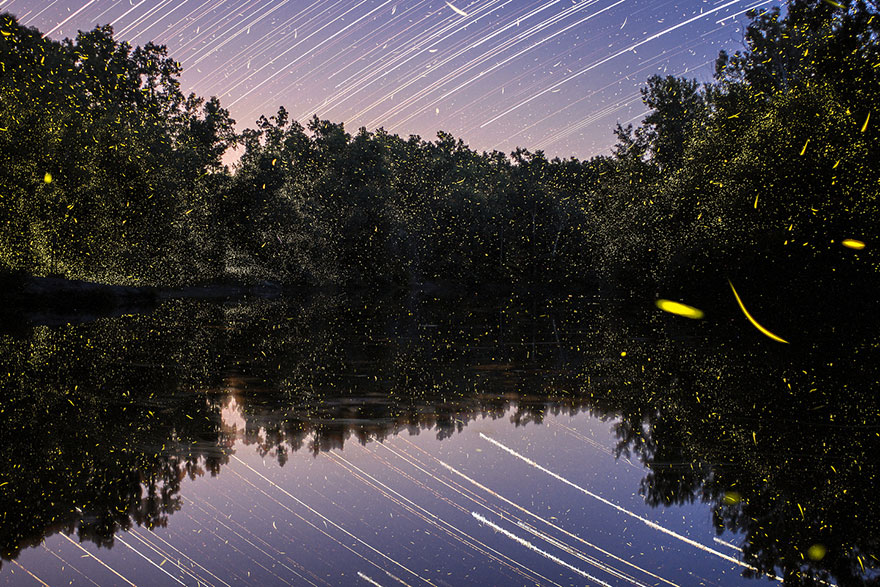fireflies-time-lapse-photography-vincent-brady-1
