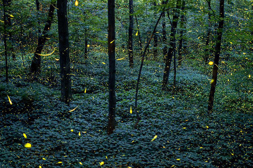 fireflies-time-lapse-photography-vincent-brady-10