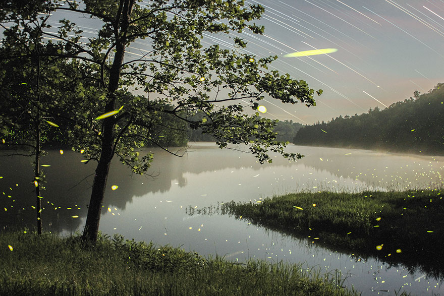 fireflies-time-lapse-photography-vincent-brady-6