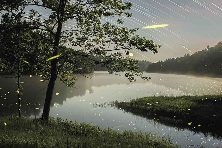 fireflies-time-lapse-photography-vincent-brady-6