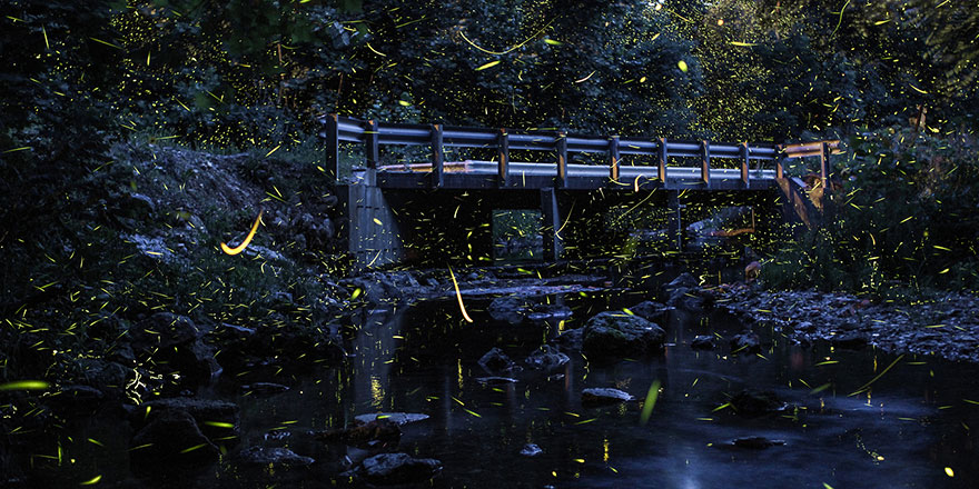 fireflies-time-lapse-photography-vincent-brady-8