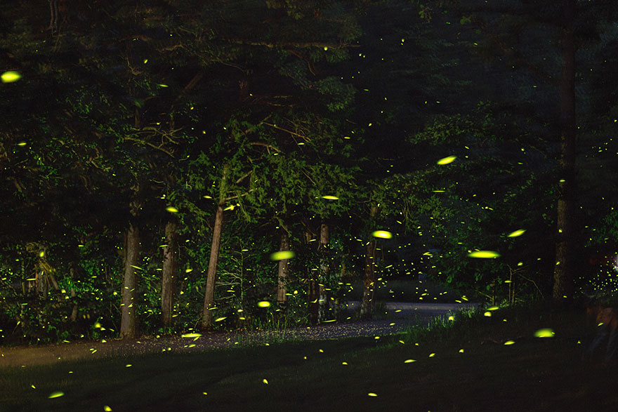 fireflies-time-lapse-photography-vincent-brady-9