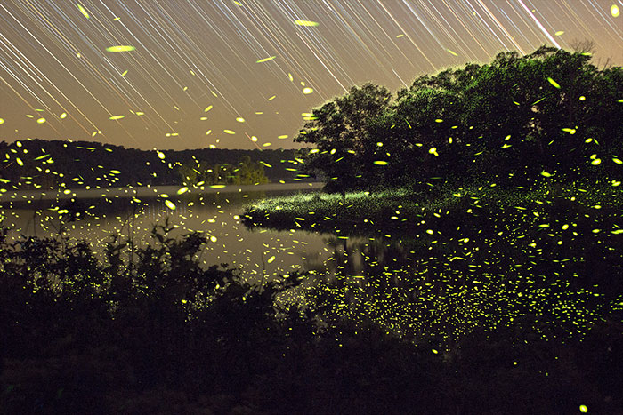 Dream-Like Pictures Of Firefly Light-Trails Captured Using Long-Exposure Photography