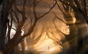 20 Magical Tree Tunnels You Should Definitely Take A Walk Through